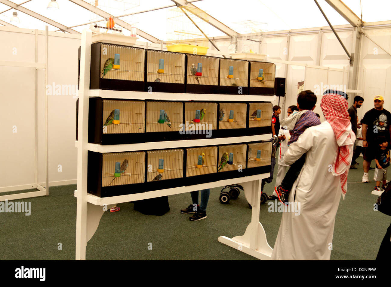 Bahraini man and his son looking at budgies at the Bahrain Animal Production Show, 2014, Bahrain International Endurance Village - Stock Image