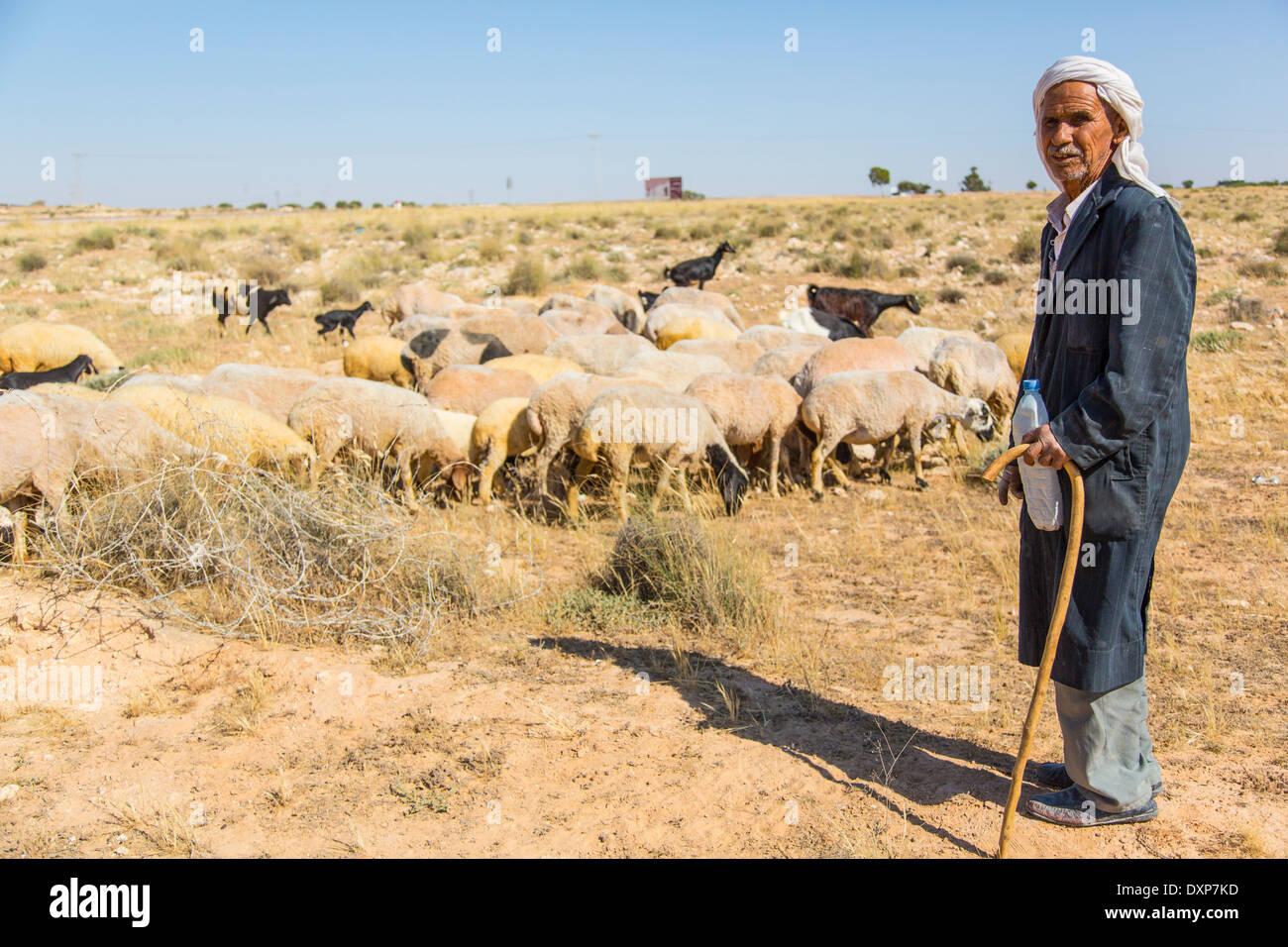 Shepherd and his sheep, Tunisia - Stock Image