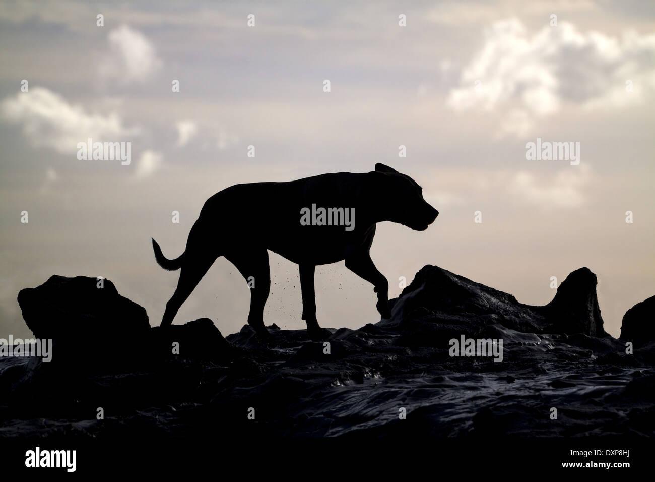 Dog on the rocks. - Stock Image