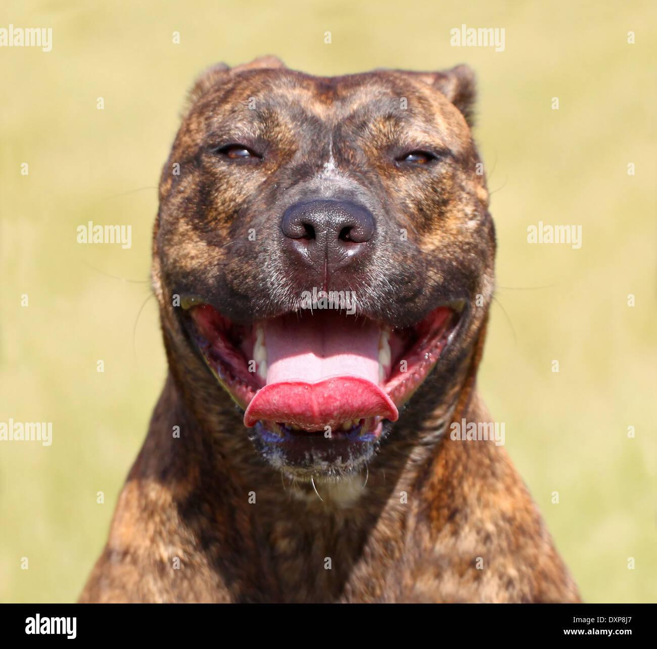 Happy dog. - Stock Image