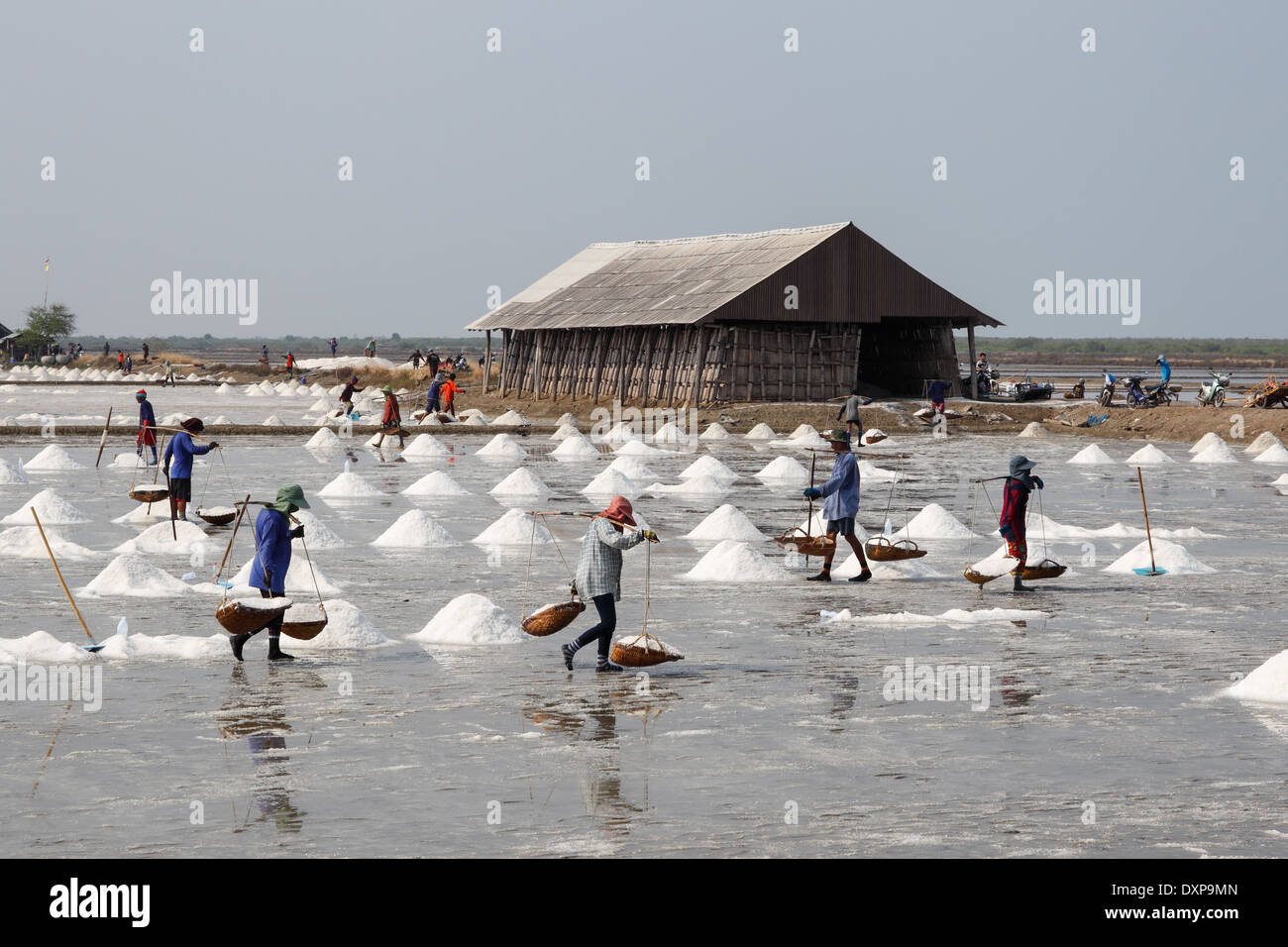 Workers in Thailand collect salt from a saltpan - Stock Image