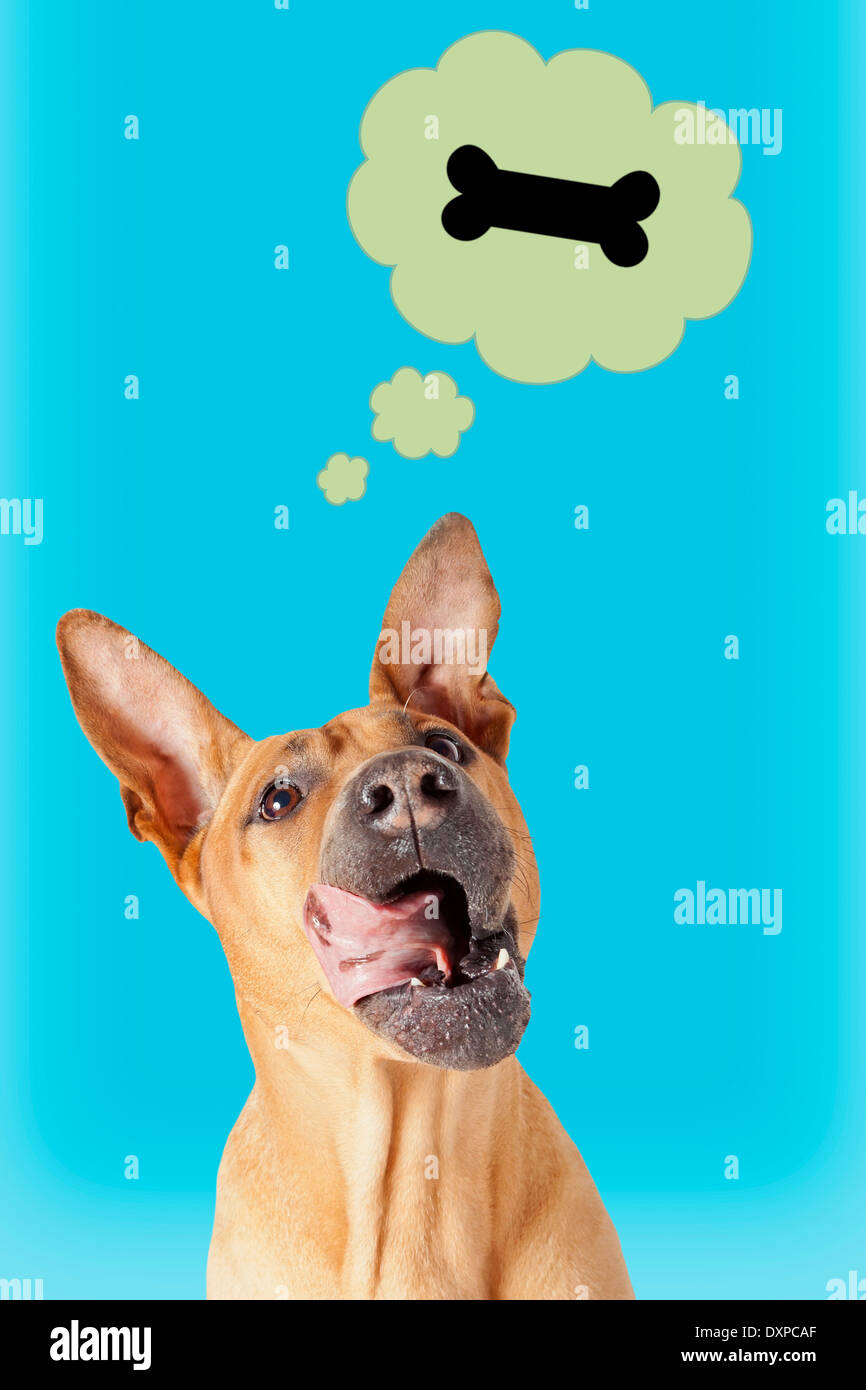 Funny mongrel dog dreaming about a bone - Stock Image