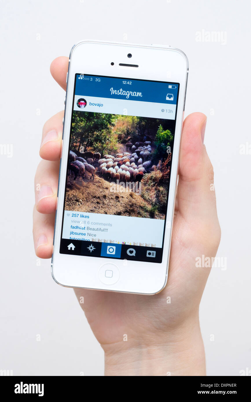 Instagram on white iPhone 5 - Stock Image