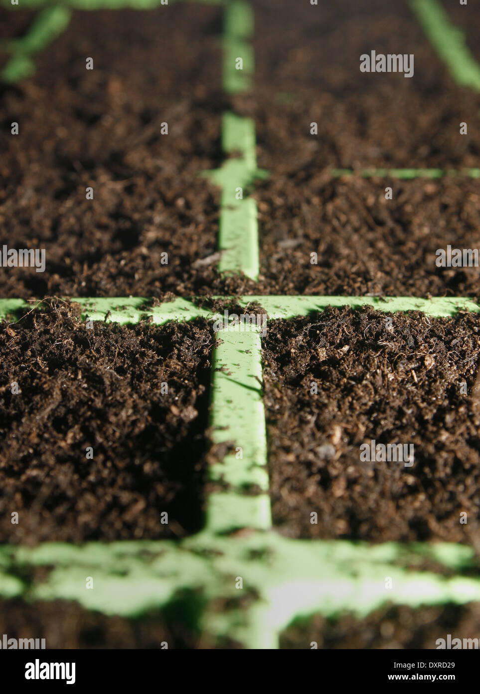 close up image of seed modules filled with compost - Stock Image