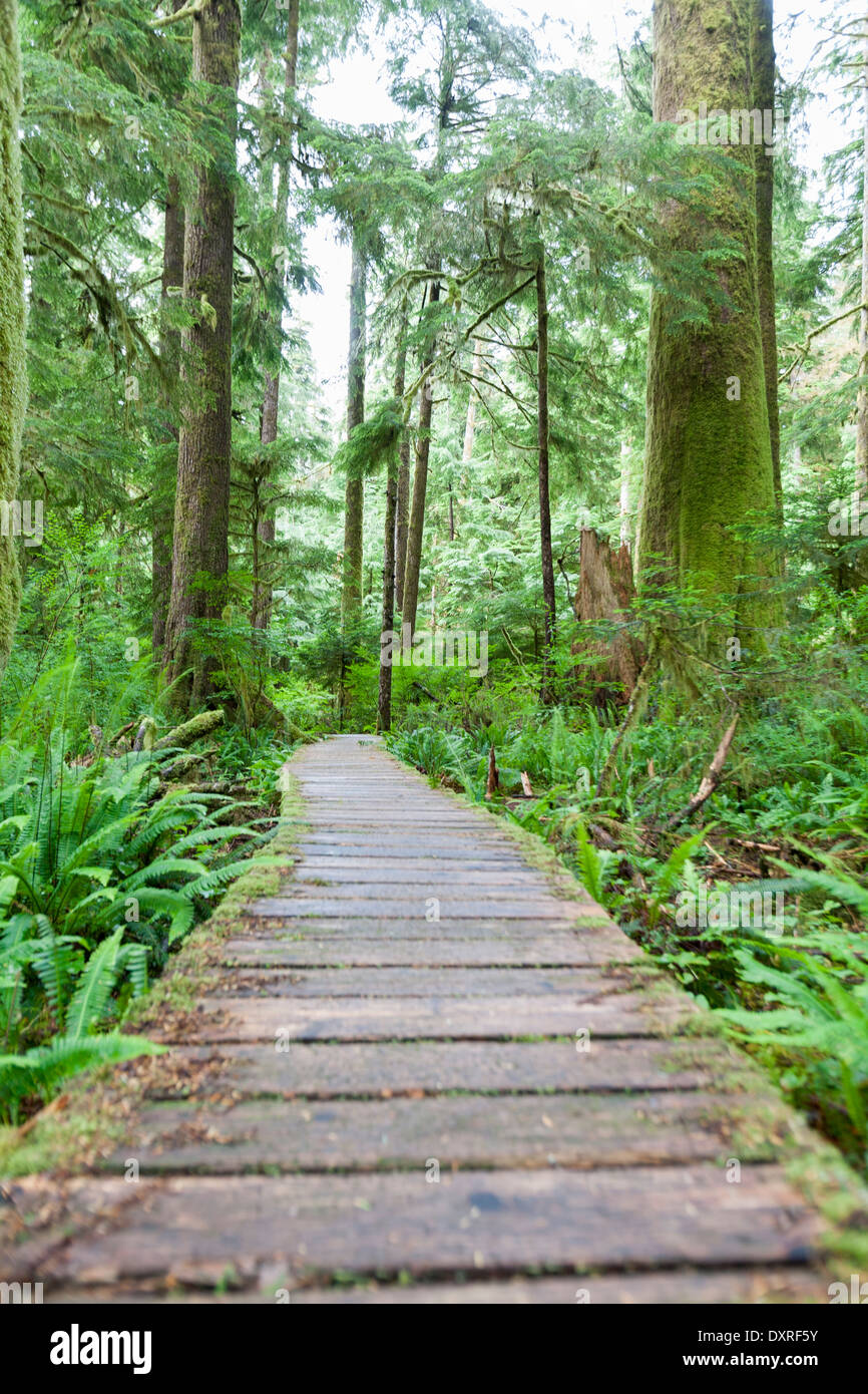 wooden boardwalk winds through the Caramanah Valle - Stock Image