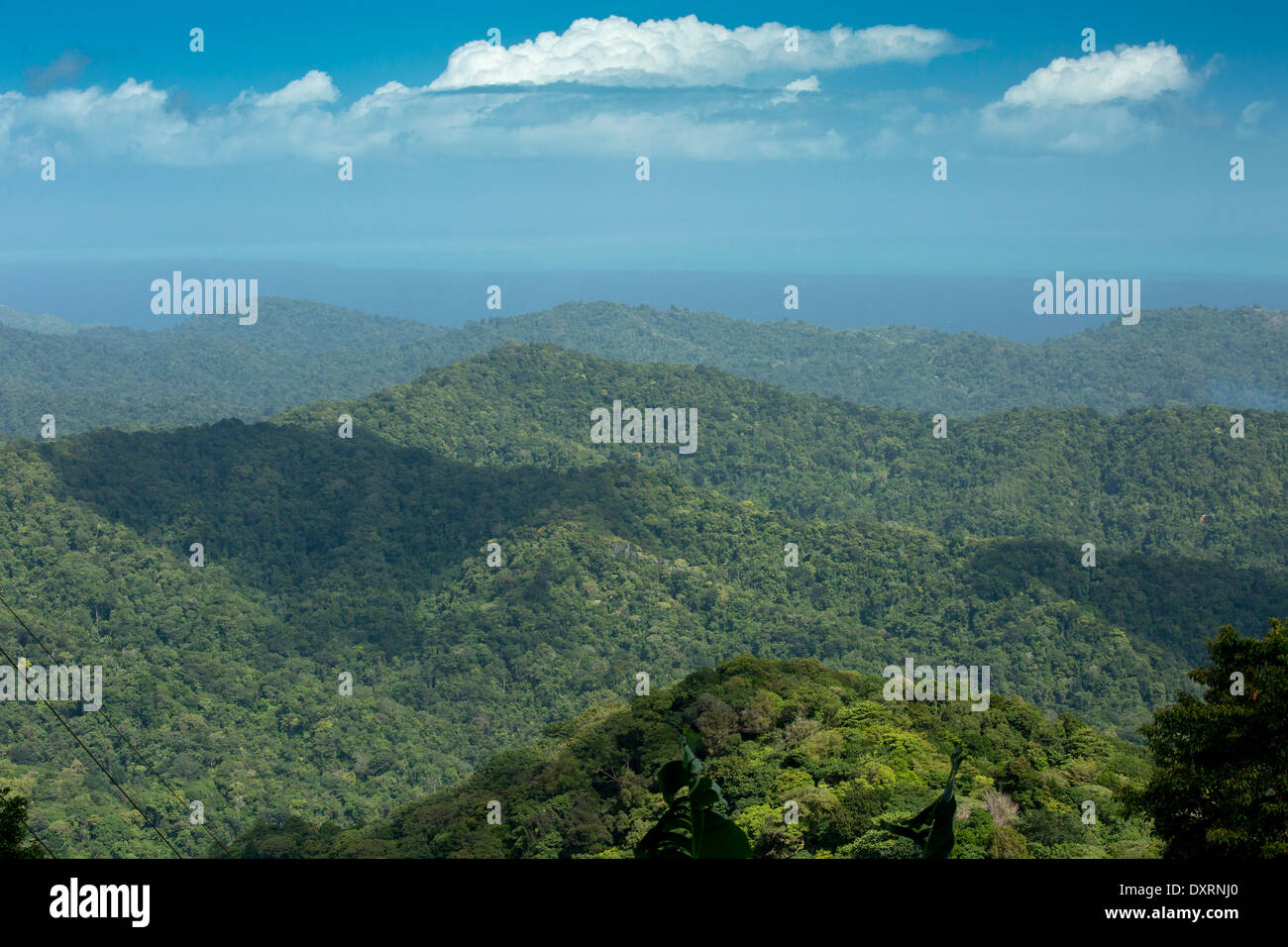 The forested protected Northern Range Mountains near Blanchisseuse, Trinidad. - Stock Image