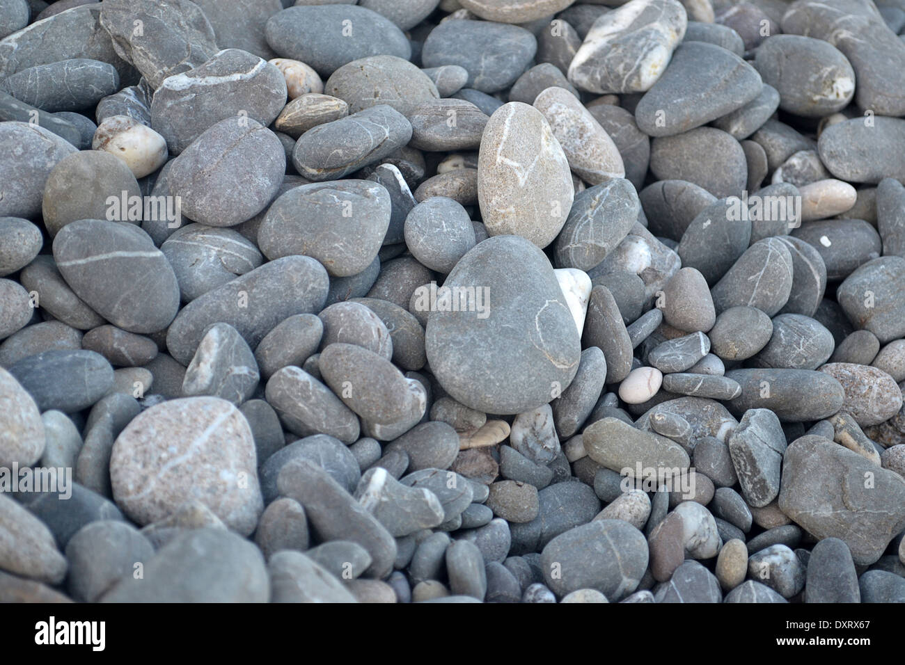 Grey pebbles on the beach at background - Stock Image