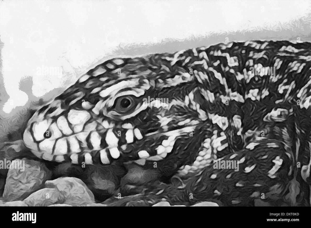 Lizards (Latin Lacertilia, previously Sauria) - suborder squad scaly reptiles class - Stock Image