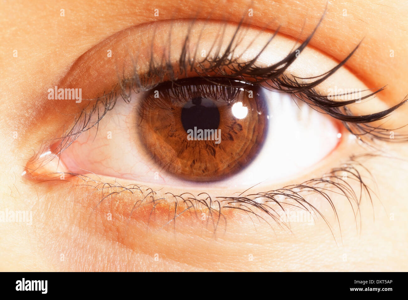 Extreme close up of brown eyes - Stock Image