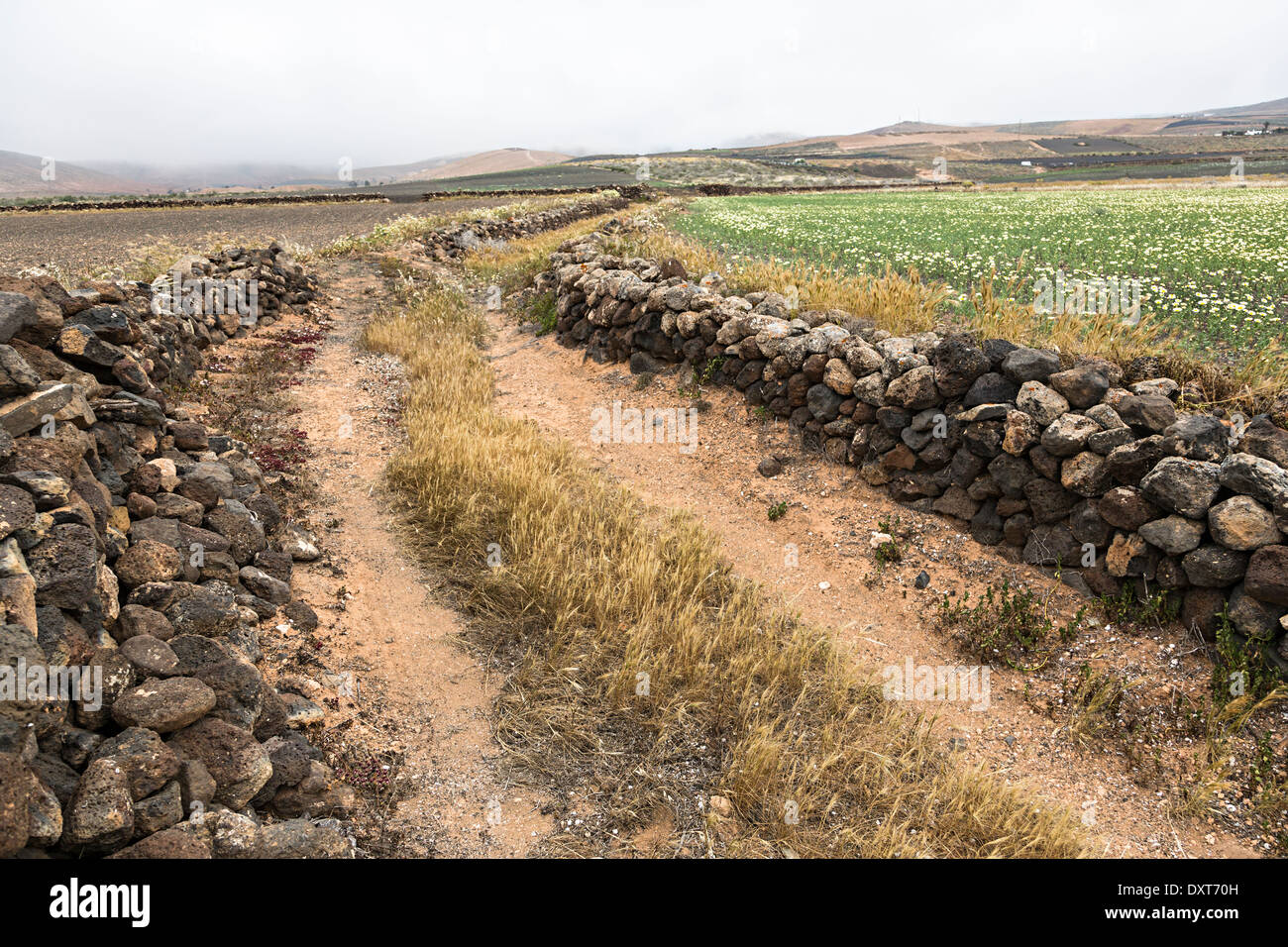 Old track with walls made from pumice, El Mojon, Lanzarote, Canary Islands, Spain - Stock Image