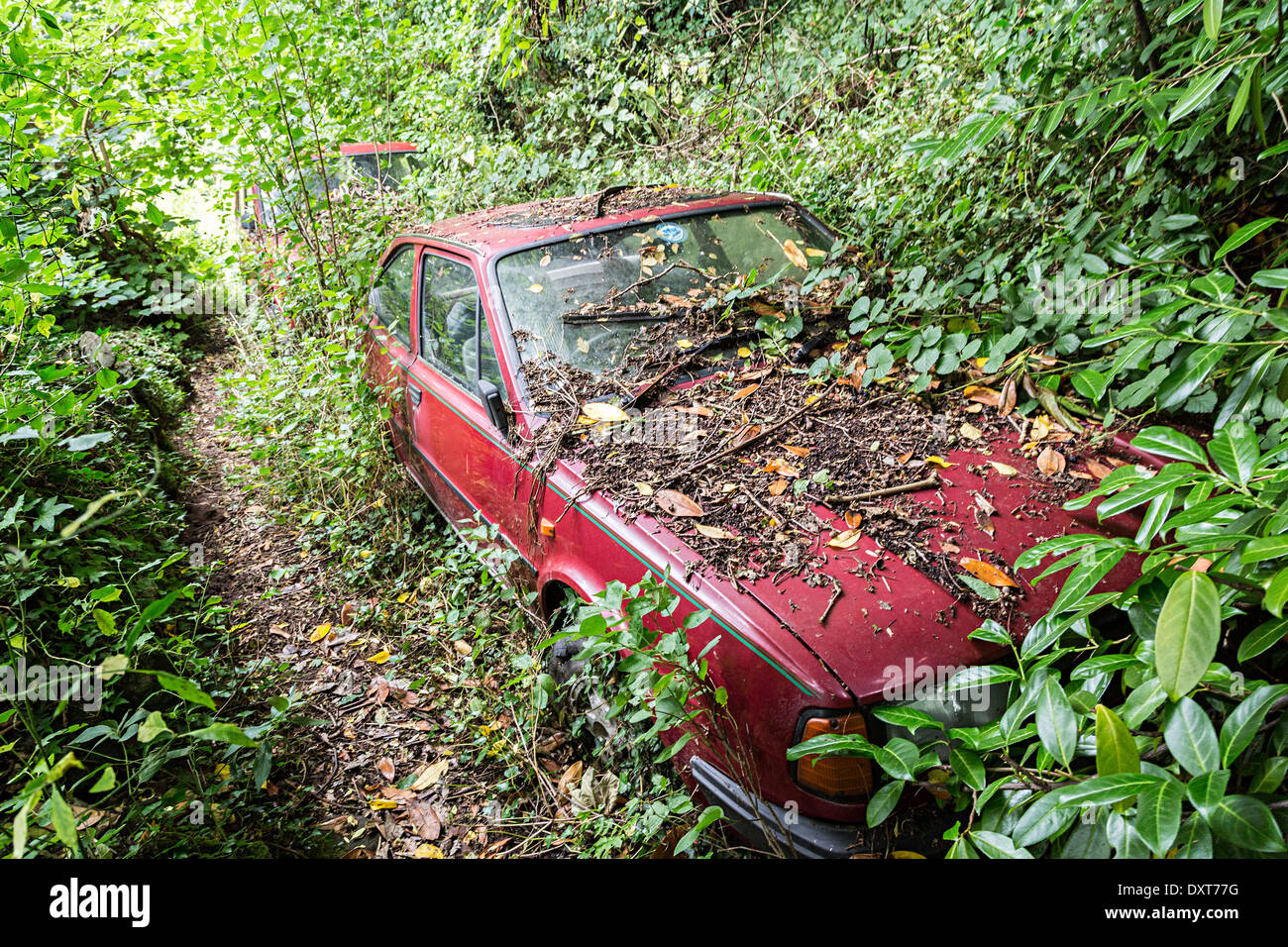 Cars abandoned in woodland and overgrown, Abergavenny, Wales, UK - Stock Image