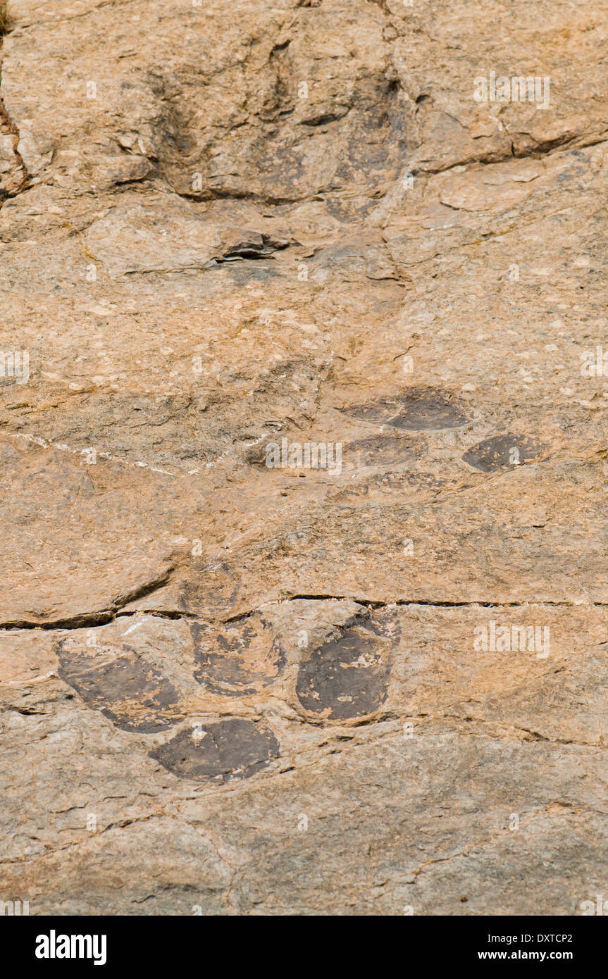 Tracks of Dinosaur footprints (or ichnites) in a flat rock, formerly the bottom of an inland lagoon at the Munilla fossil site, La Rioja, Spain. - Stock Image