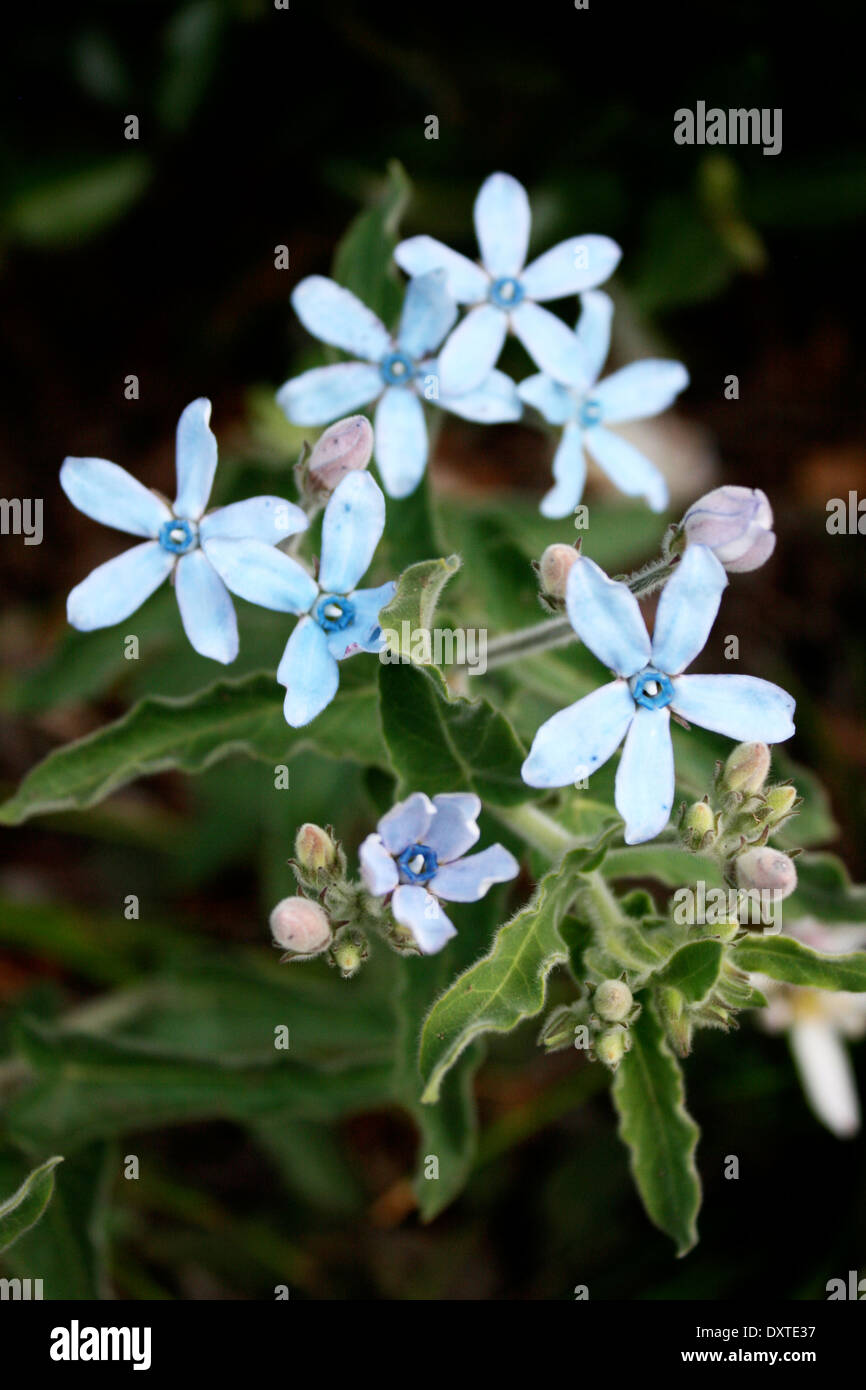 Star Shaped Flowers Stock Photos & Star Shaped Flowers Stock Images ...