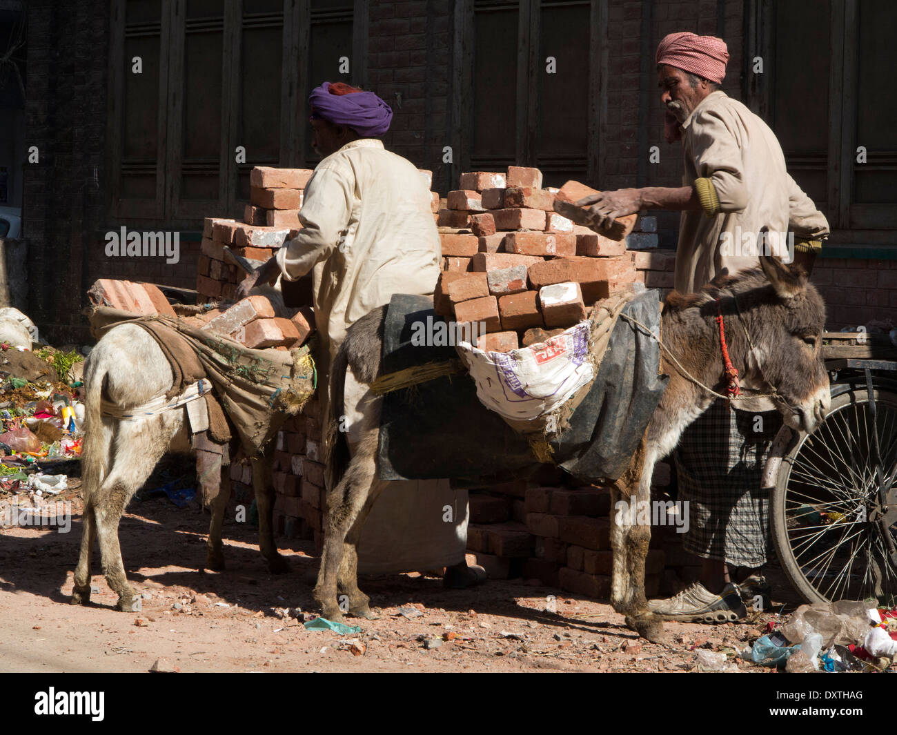 India, Punjab, Amritsar, animal cruelty, donkeys being overloaded with bricks in panniers - Stock Image