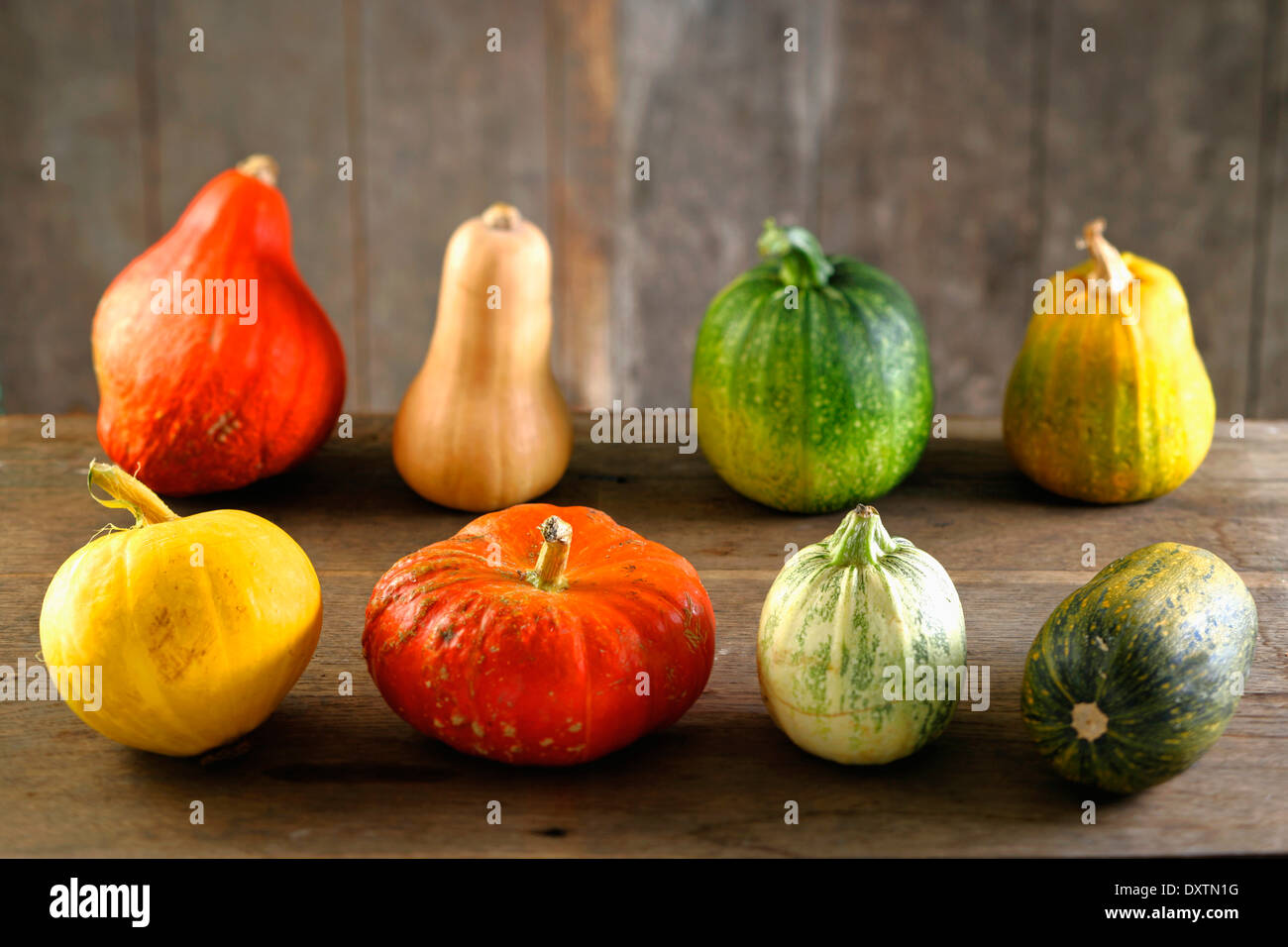 Assorted pumpkins and squashes - Stock Image