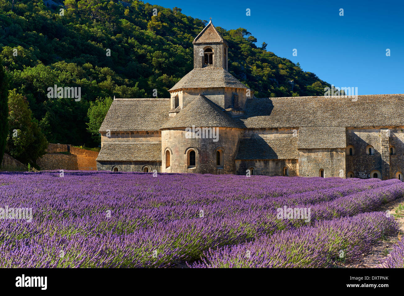 The 12th century Romanesque Cistercian Abbey of Notre Dame of Senanque set amongst the flowering lavender fields Stock Photo