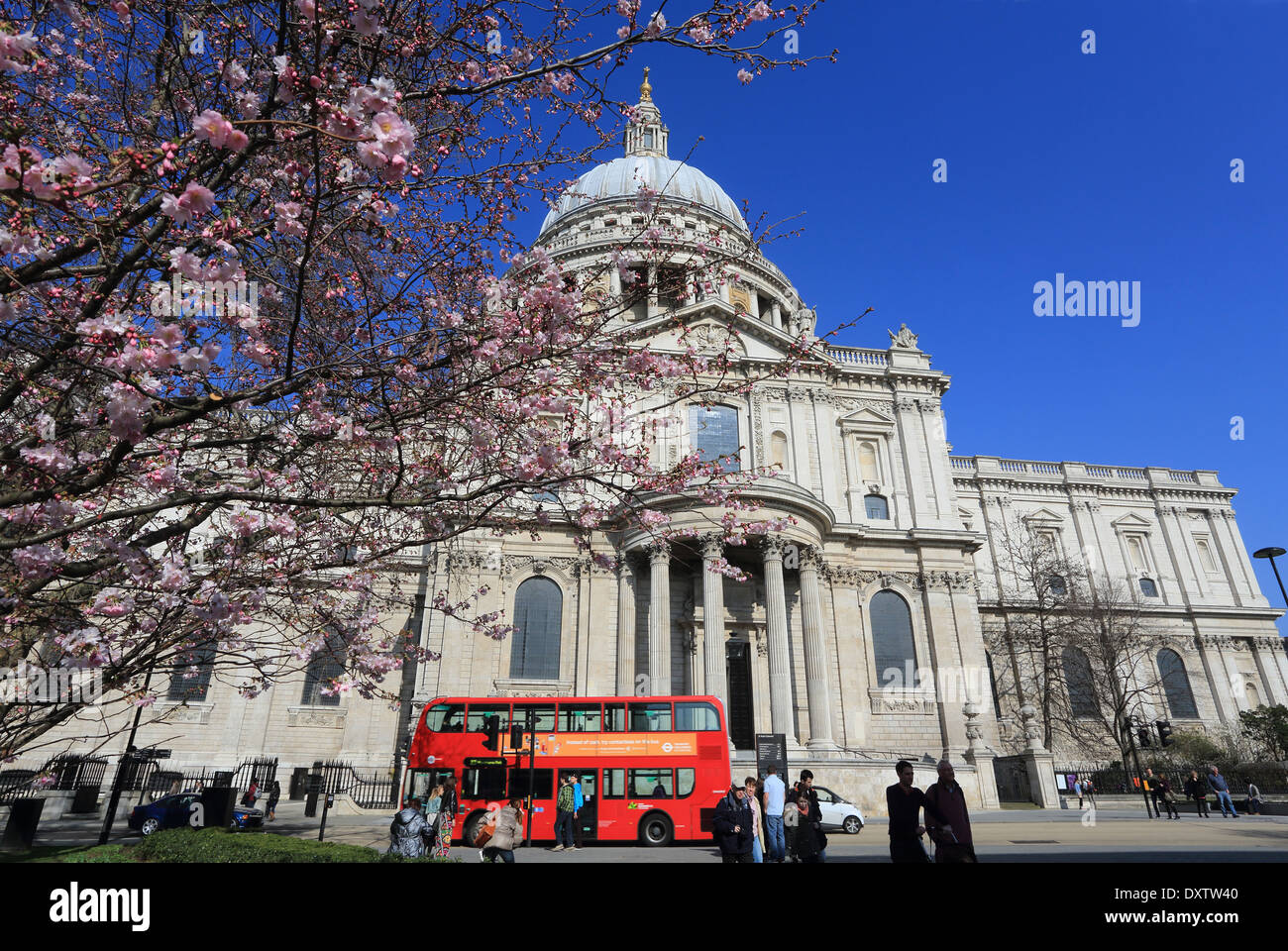 St Paul's Cathedral at spring time, with red buses driving past, in London, England, UK - Stock Image