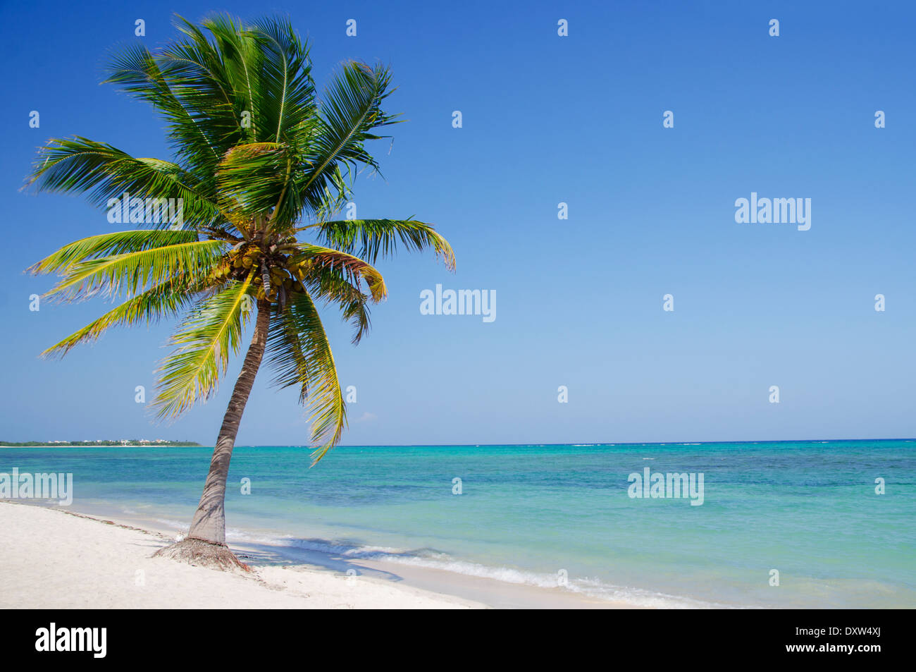 leaning palm tree stock photos leaning palm tree stock images alamy