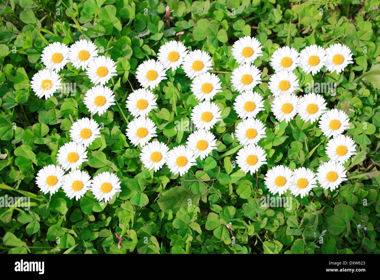 2015 with daisies on shamrocks Stock Photo