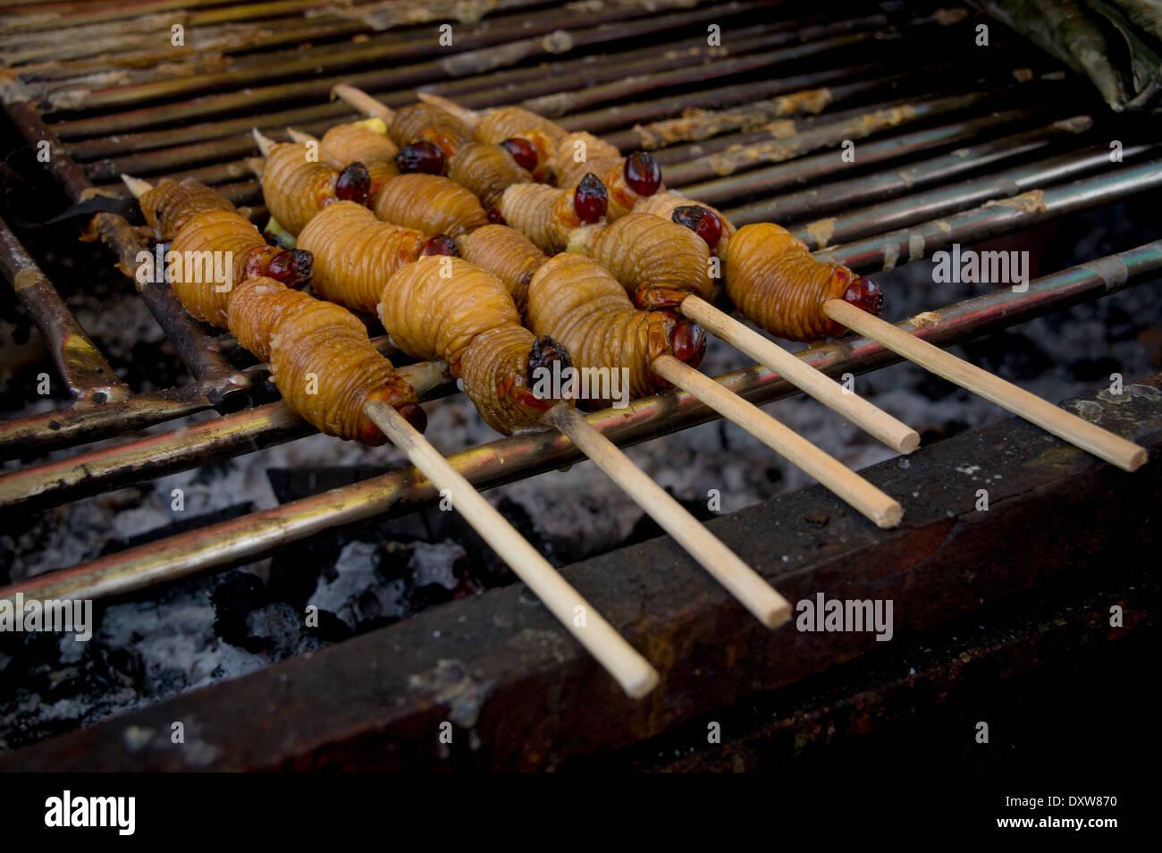 Edible palm weevil larvae (Rhynchophorus phoenicis) from the Amazon - Stock Image