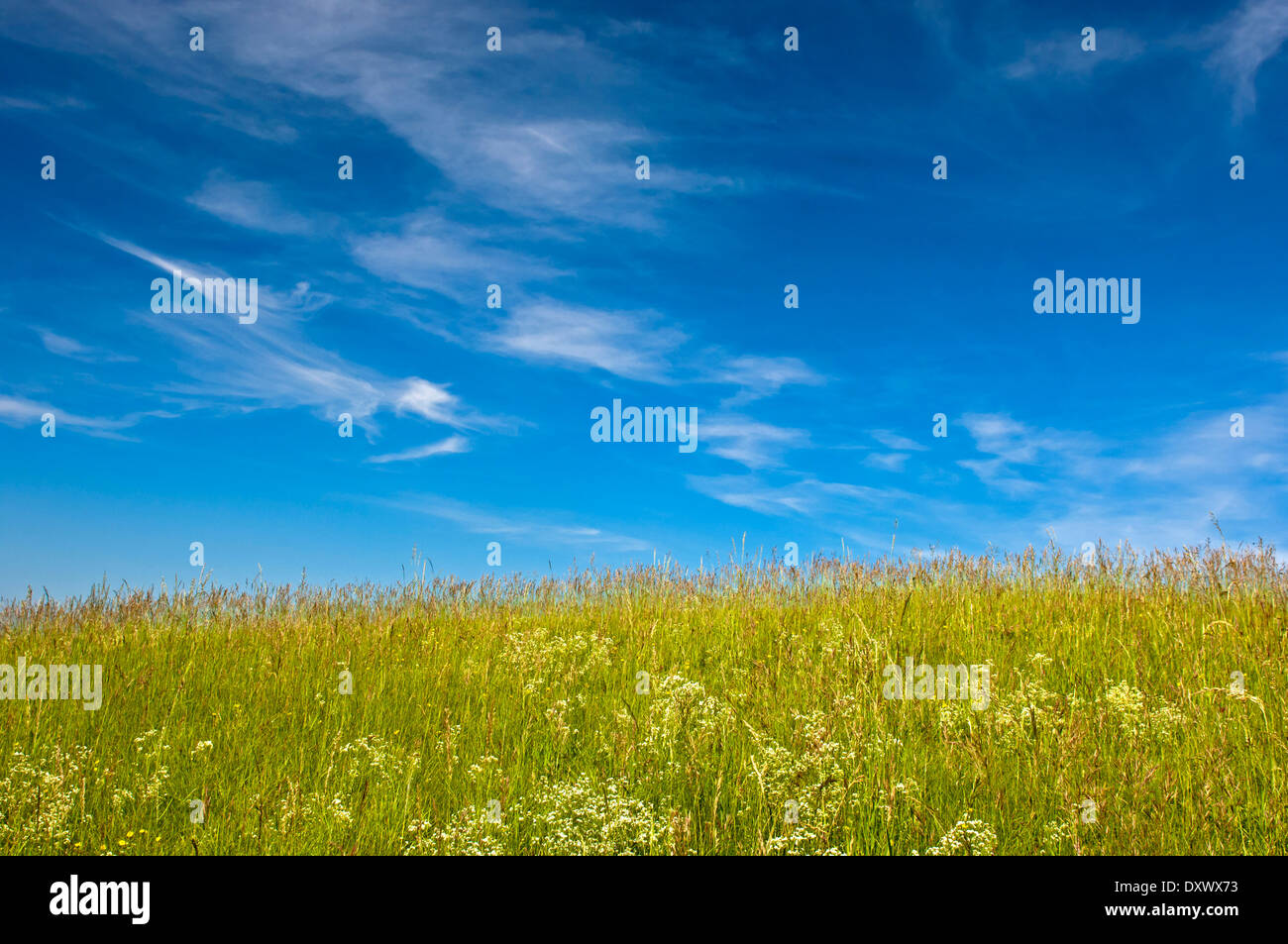 Blue sky with cirrus clouds above a summer meadow, Baden-Württemberg, Germany - Stock Image