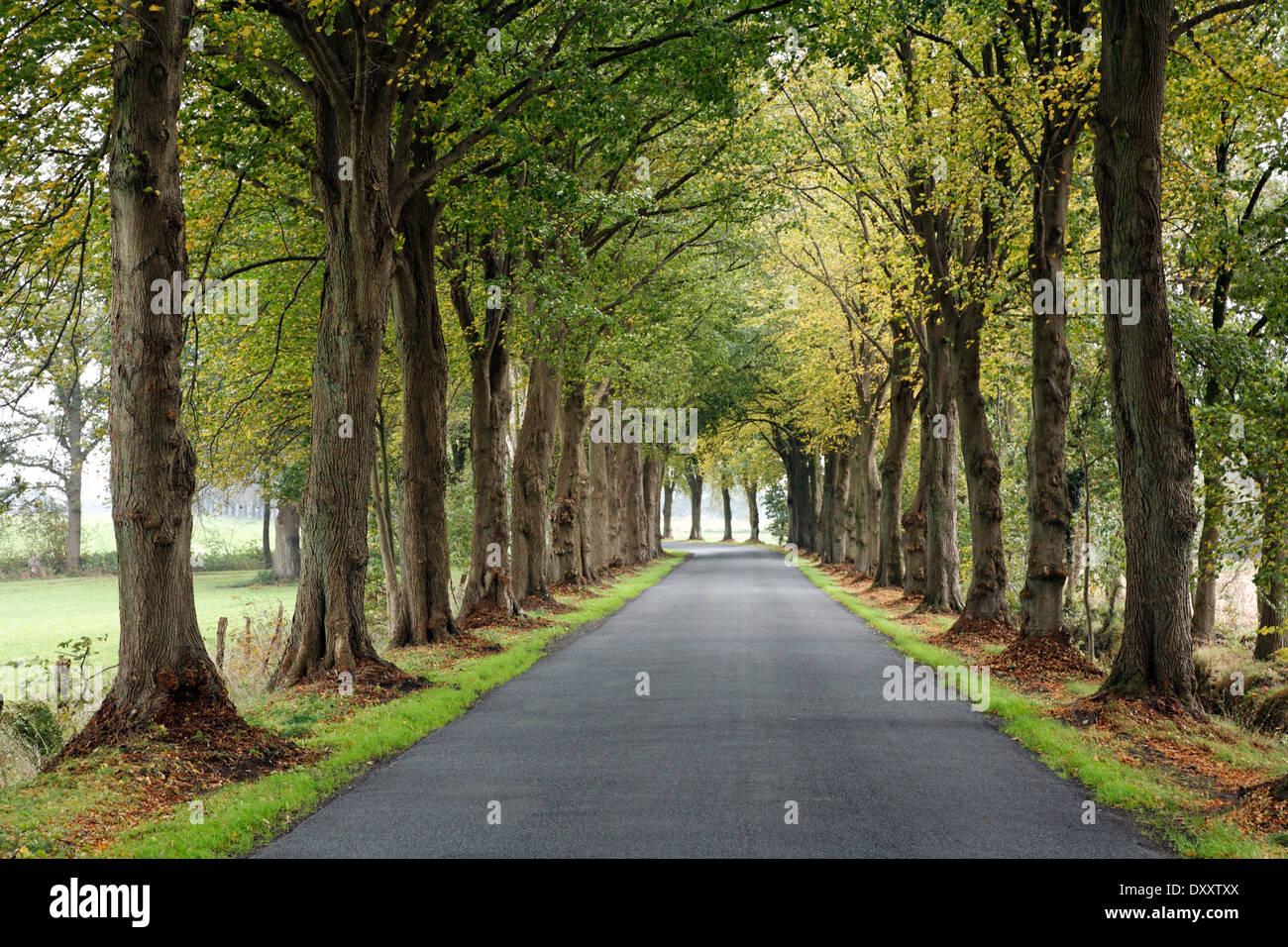 Germany, Lower Saxony, tree-lined avenue, road, Deutschland, Niedersachsen, Baumallee, Strasse - Stock Image