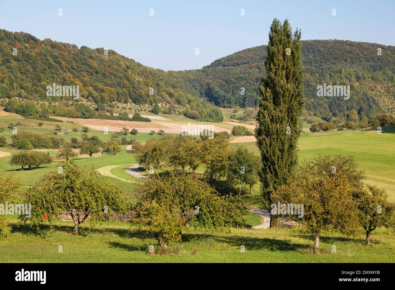 Germany, Baden-Wurttemberg, Swabian Alb, landscape near Unterböhringen, tree, road - Stock Image