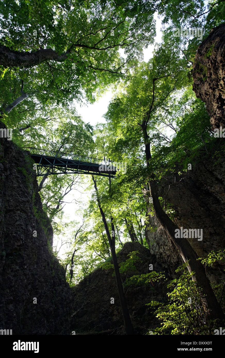Germany, Baden-Wurttemberg, near Heubach Rosenstein castle ruins, bridge, forest, Deutschland, Baden-Württemberg, nahe Heubach, - Stock Image