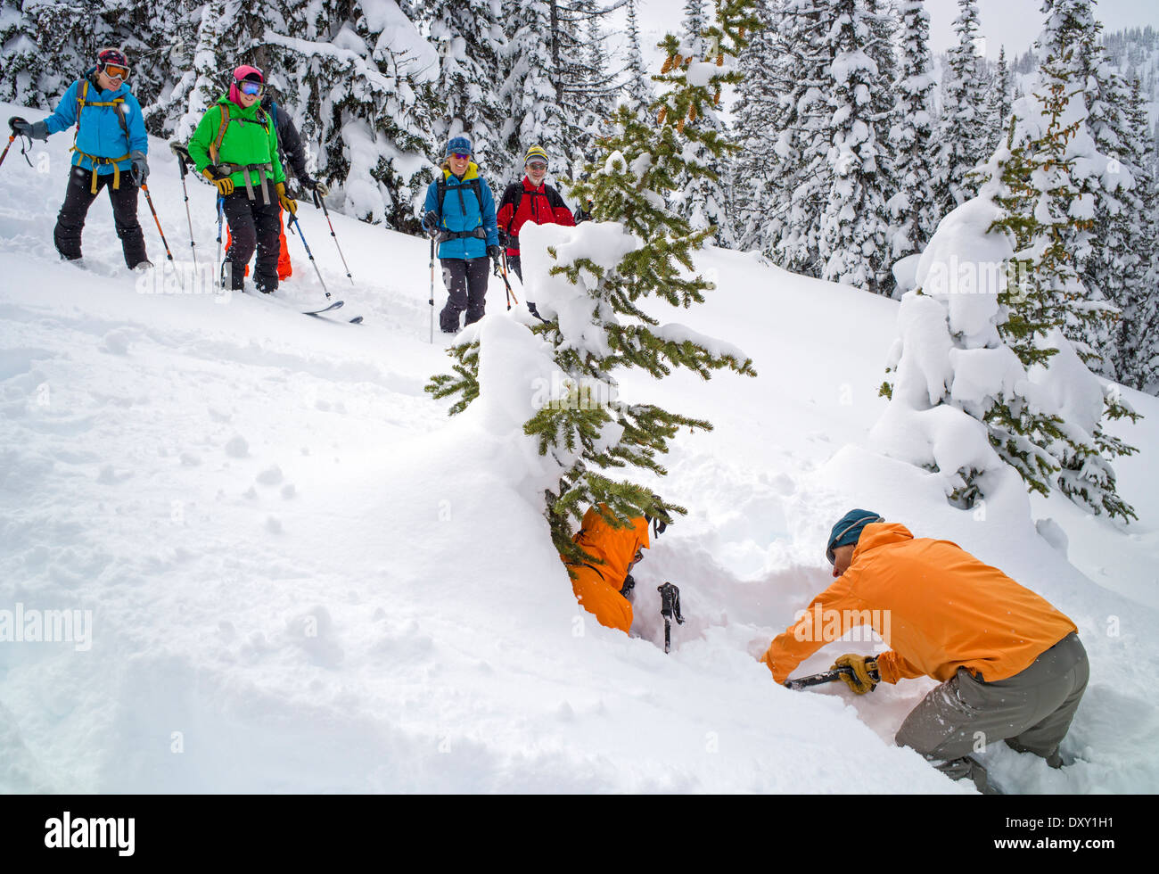 Professional back country ski mountain guides demonstrating a rescue technique for skier trapped in snow tree well - Stock Image