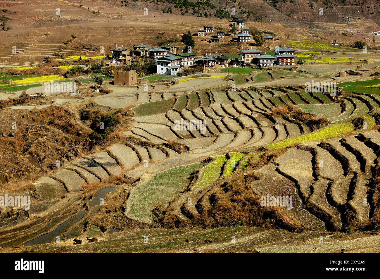 Views of terraced fields in Bhutan. Digitally Manipulated Image. Stylised by enhancing color, sharpening and adding texture. - Stock Image
