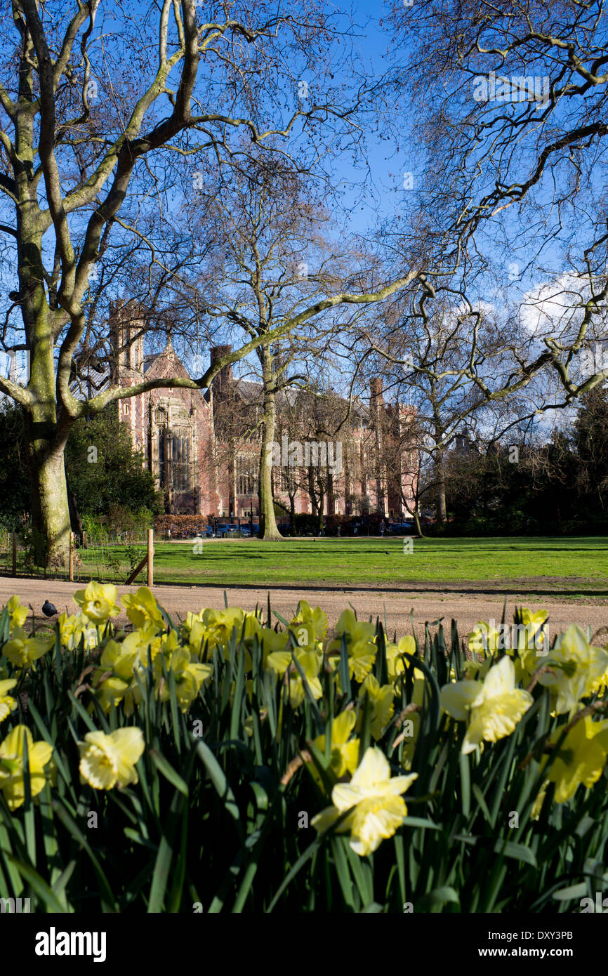 Lincoln's Inn Fields park and square in spring with daffodils in foreground and Great Hall in background London England UK - Stock Image