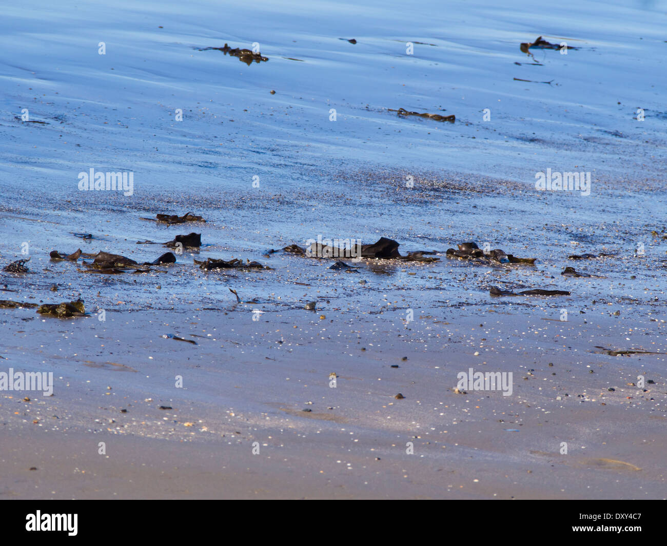 Fine grained beach sand on the North Sea coast of Norway, reflecting the blue sky - Stock Image