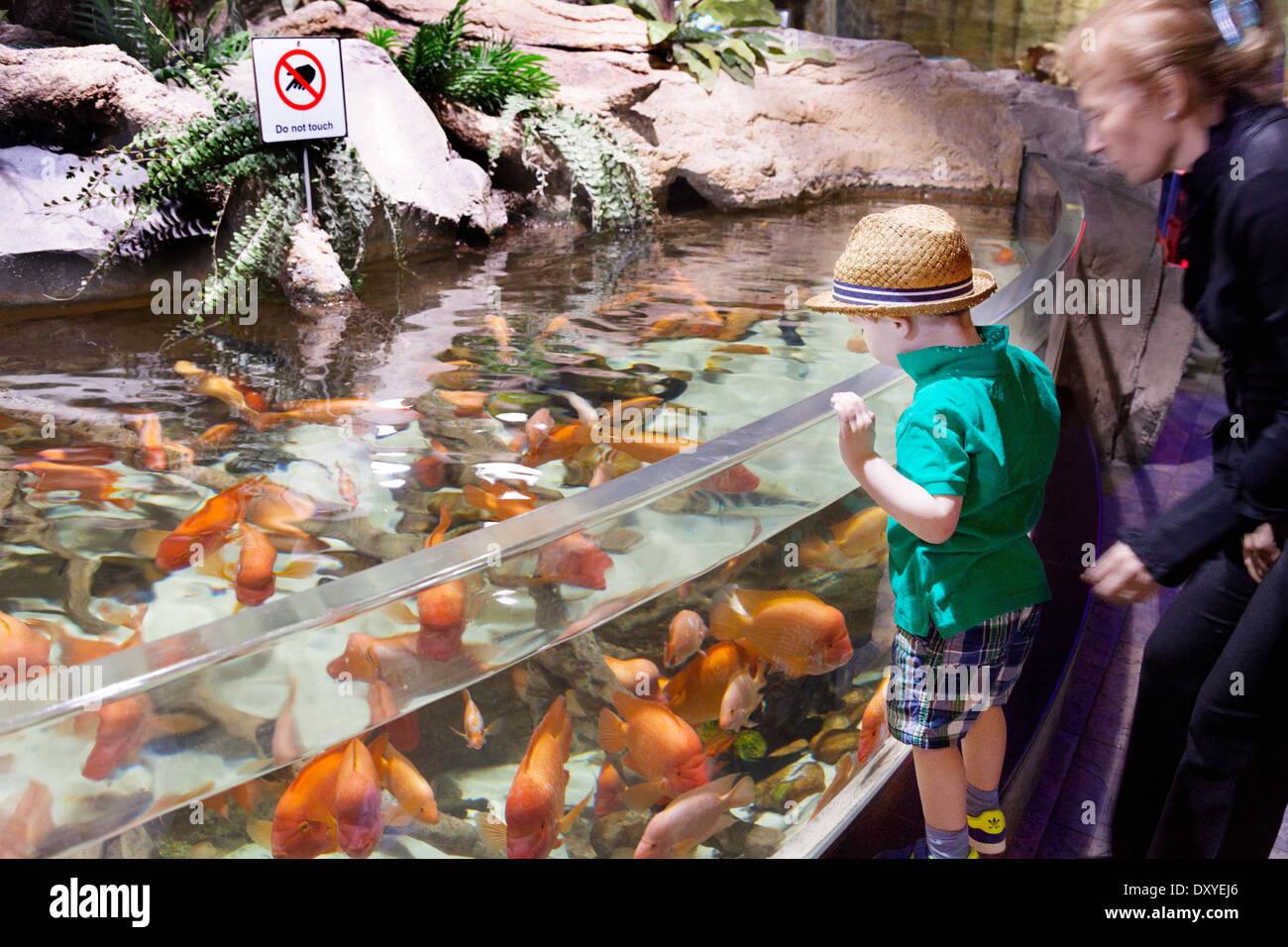 A mother and child looking at fish, Dubai Aquarium and Underwater Zoo, Dubai Mall, UAE, United Arab Emirates Stock Photo