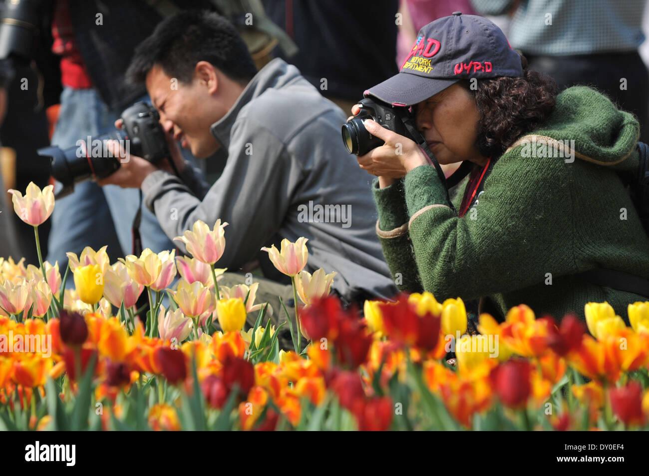 Zhengzhou, China's Henan Province. 2nd Apr, 2014. Tourists take photos of tulip flowers at a park in Zhengzhou, Stock Photo