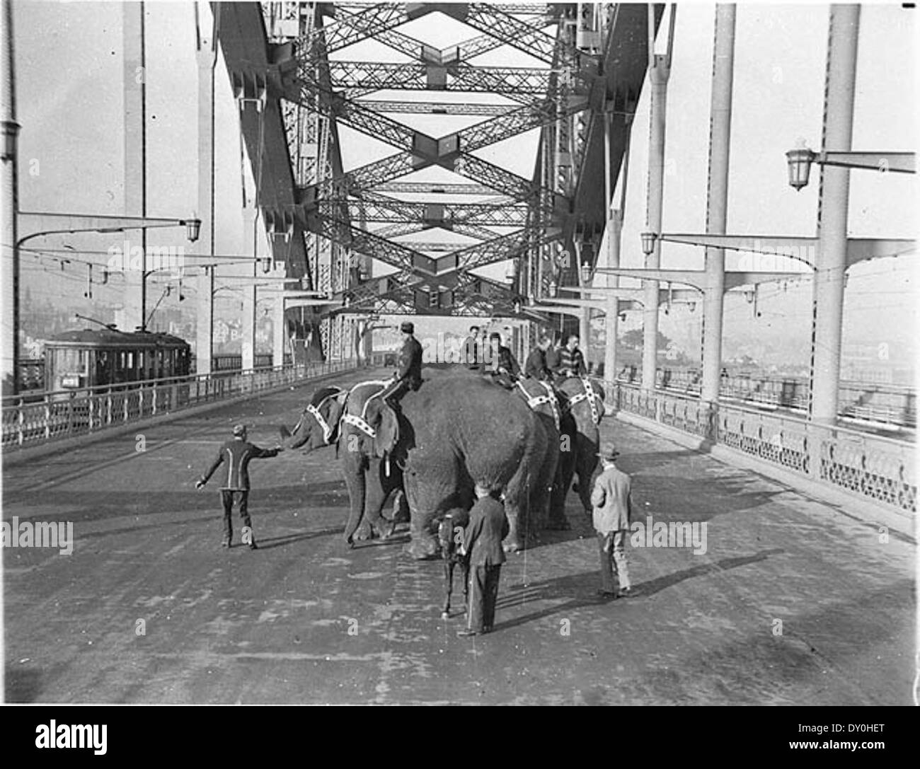 Six Wirths' Circus elephants with their attendants and a Shetland pony crossing the Sydney Harbour Bridge for publicity, 3 April 1932 / Sam Hood - Stock Image