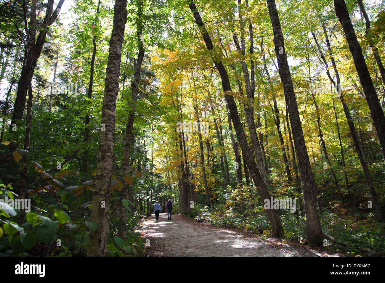 A couple walks along the Sabbaday Brook trail off the Kancamagus Highway at the beginning of Autumn. Stock Photo