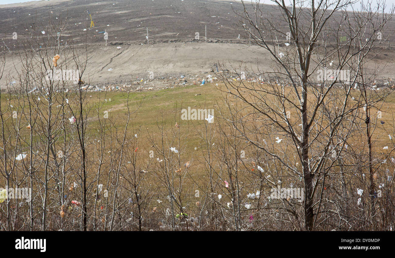 Plastic bags and other debris blown by the wind into trees surrounding Republic Services' Carleton Farms Landfill. - Stock Image