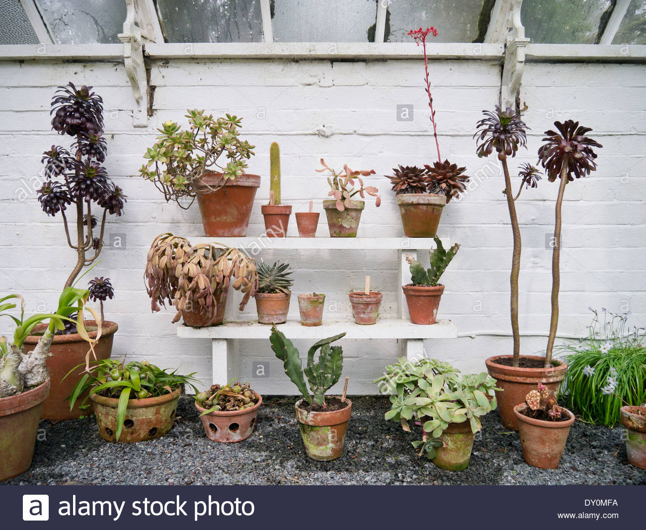 Plants in the greenhouse at Hergest Croft Gardens: Kington, Herefordshire, England. - Stock Image