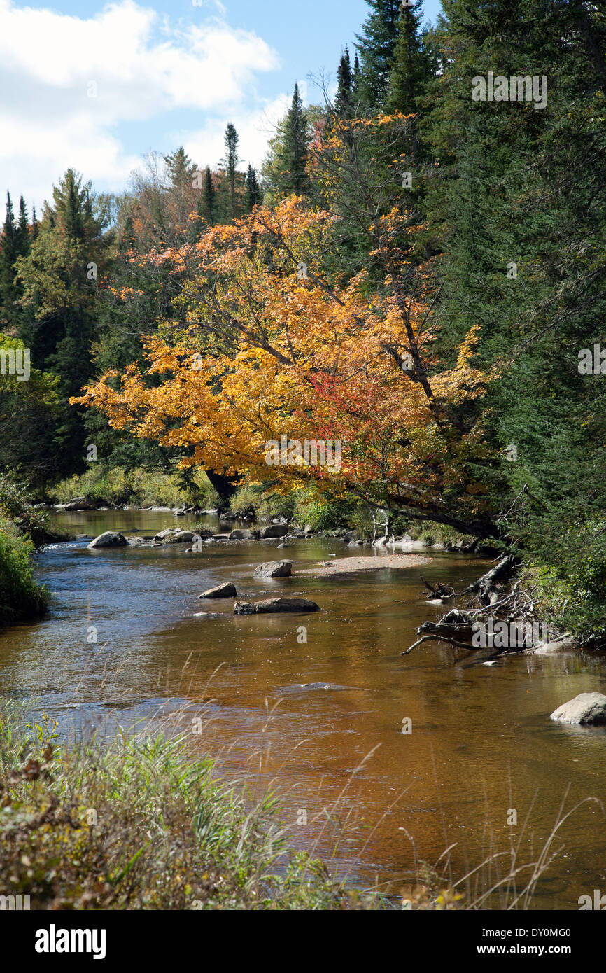 Early fall color along the Ham branch of the Gale River, Franconia, New Hampshire. - Stock Image