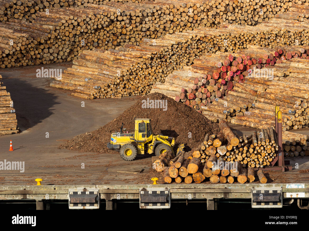 Lumber for export on the wharf - Stock Image