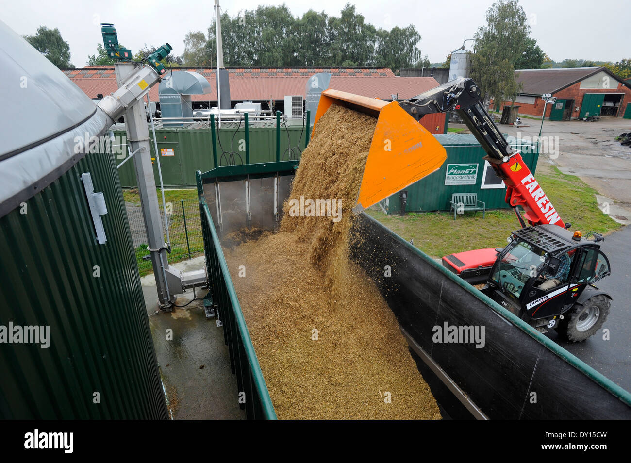 GERMANY Schleswig-Holstein, Biogas plant at cow milk farm, maize substrate for fermentation - Stock Image