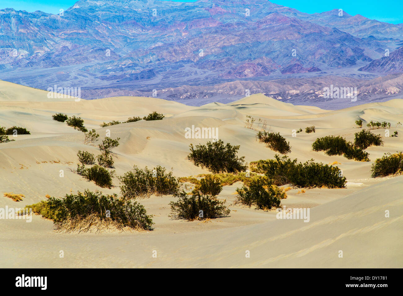 Death Valley National Park California United States of America. Mesquite Flat sand dunes - Stock Image