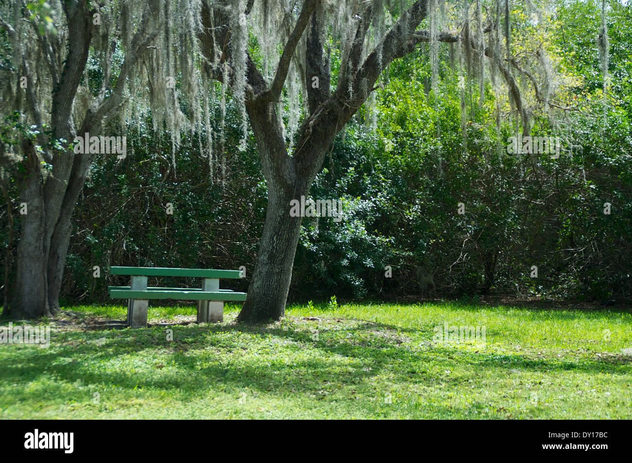 Superb A Cement Picnic Table Sits Under A Couple Of Oak Trees With Home Interior And Landscaping Fragforummapetitesourisinfo