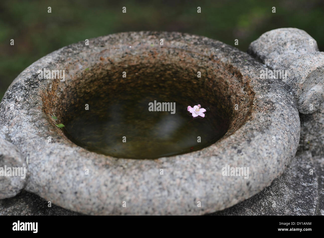 ancient water trough, antiker Wassertrog, mit blüte, with bloom, - Stock Image