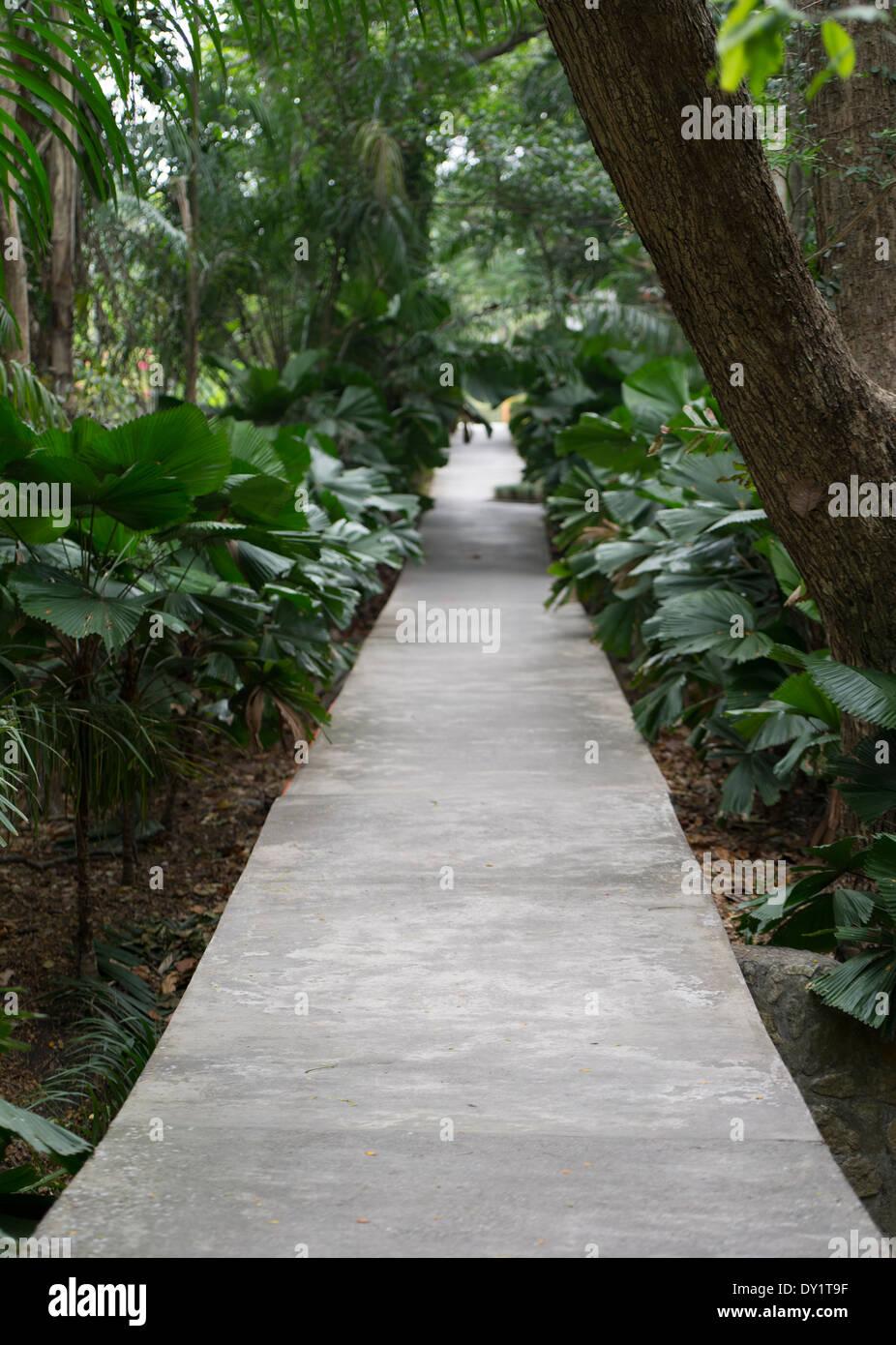 National Botanical Gardens , Port Moresby , Papua New Guinea - Stock Image