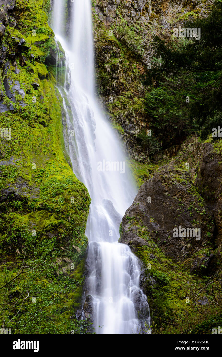 Starvation Creek Falls along the Columbia River Gorge. - Stock Image