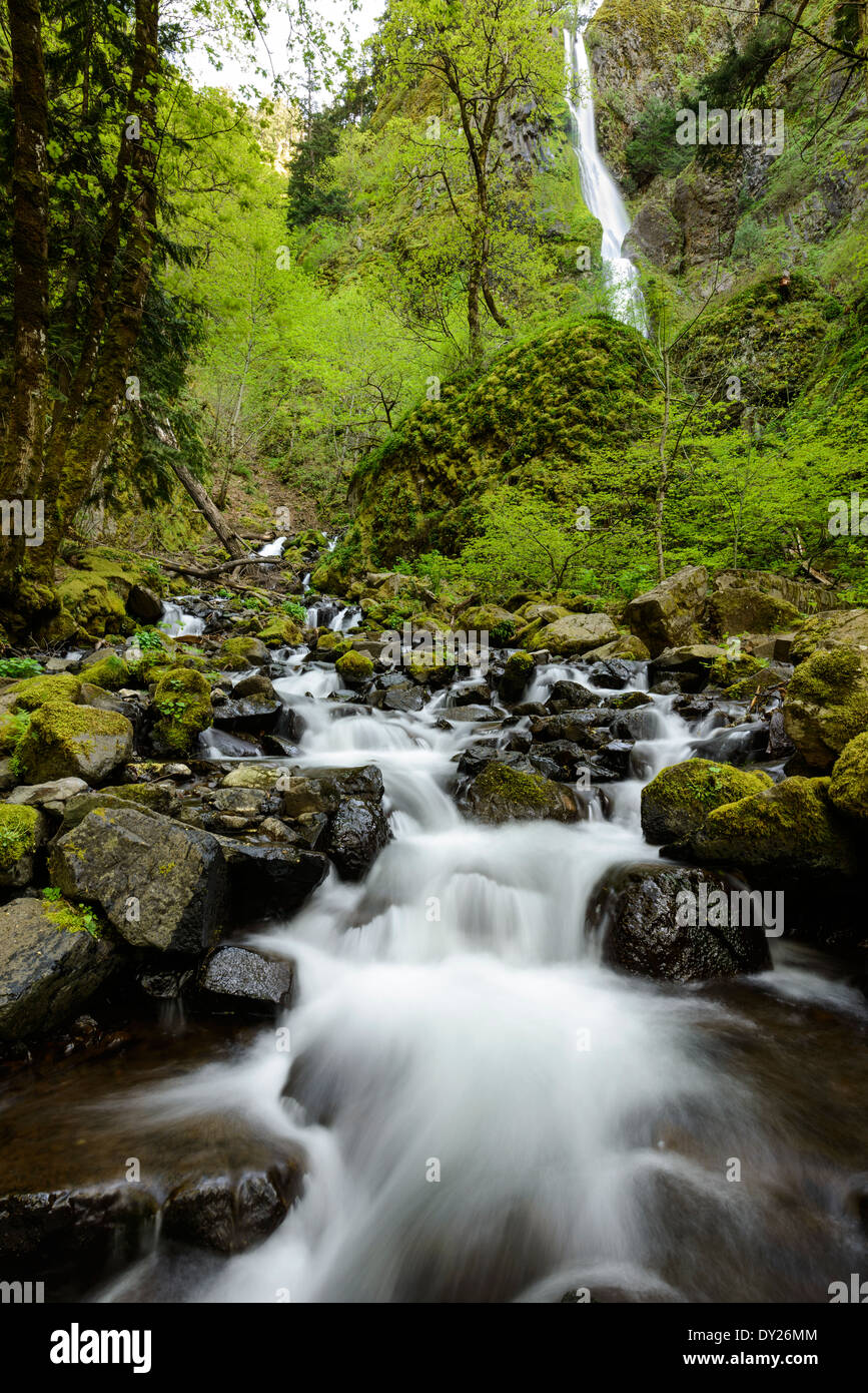 Starvation Creek with Falls in the background along the Columbia River Gorge. - Stock Image