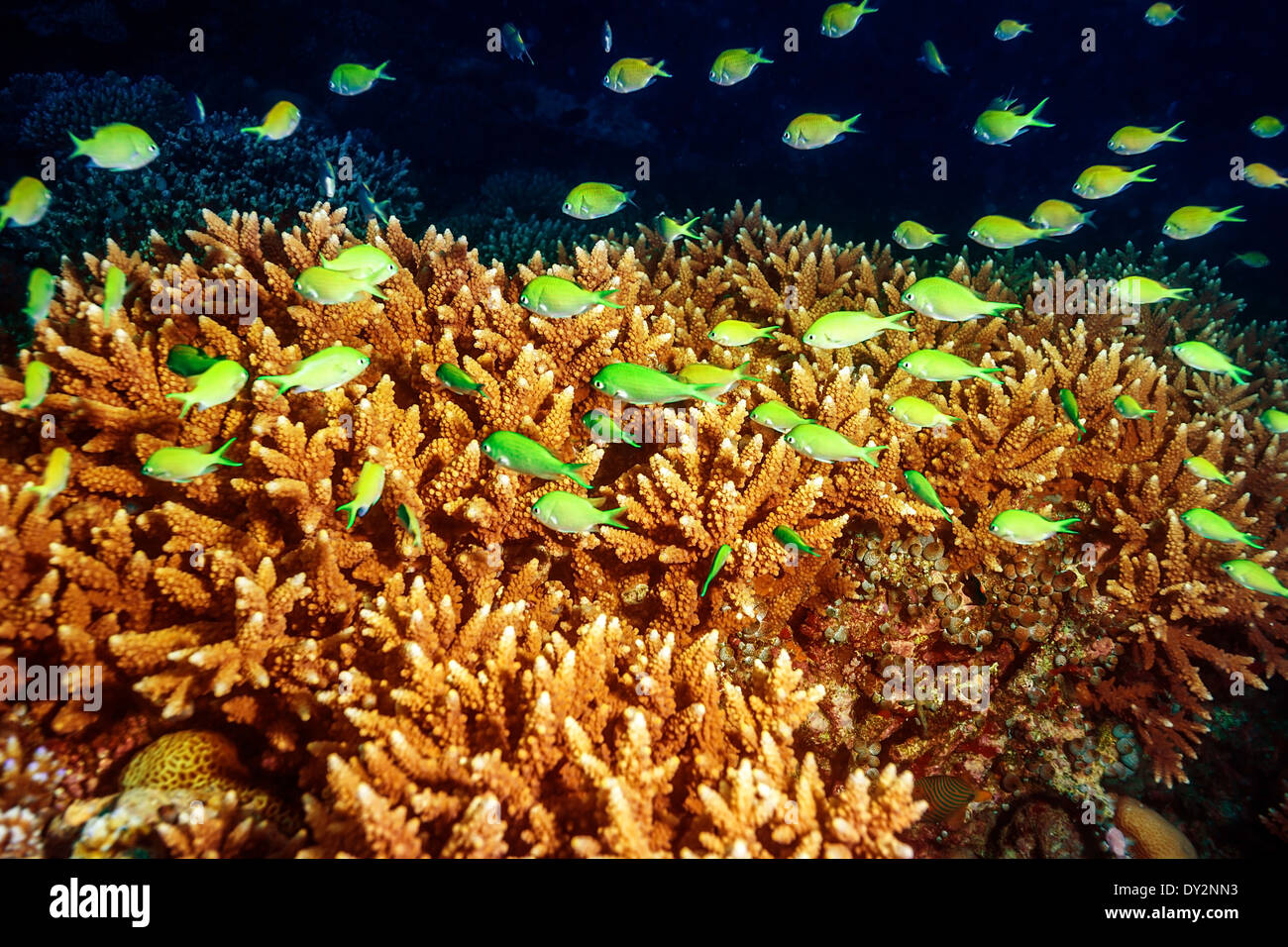 Beautiful marine life, abstract natural background, beauty of Indian ...