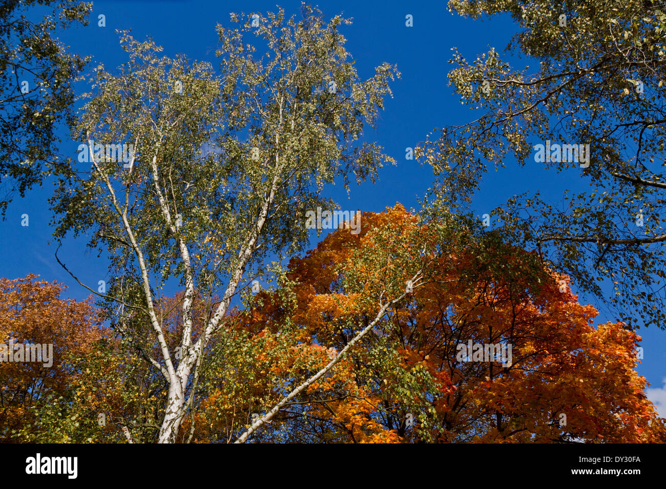 Colors of Autumn, Lidice Park, Czech republic Stock Photo