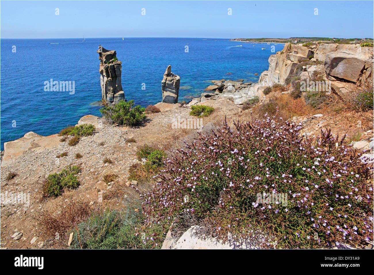 Shrub of Statice or Sea Levender (Limonium) at 'Le Colonne' San Pietro Island - Stock Image